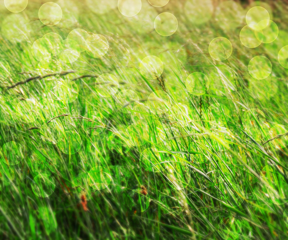 Grass Nature Green Abstract Background