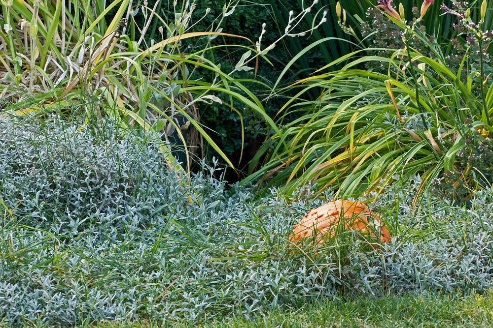 Grass Texture 12