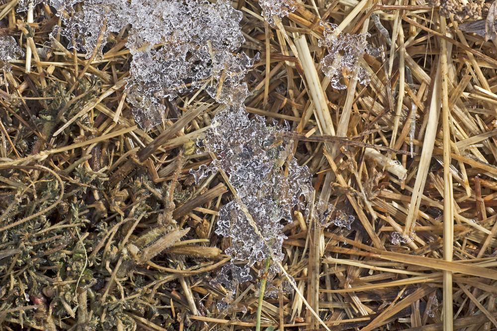 Grass Texture 15