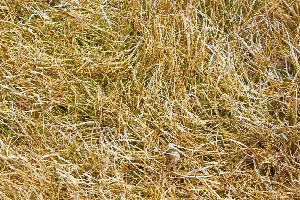 Grass Texture 17