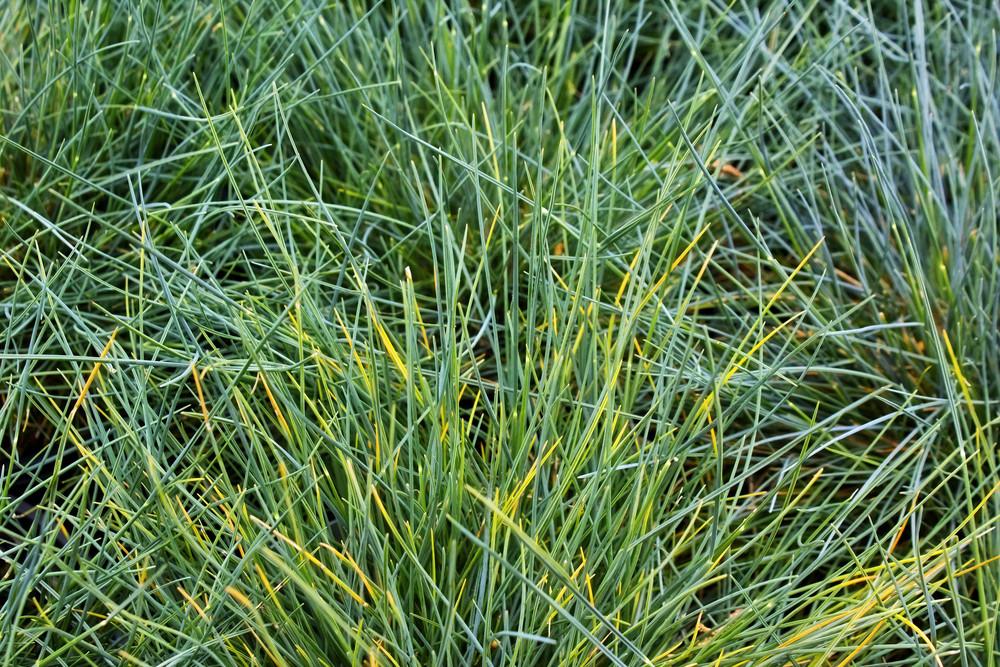 Grass Texture 19