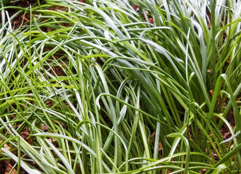 Grass Texture 21