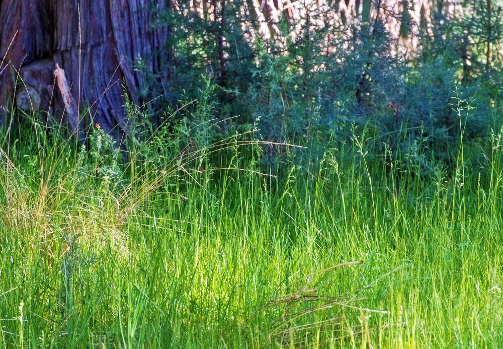 Grass Texture 4