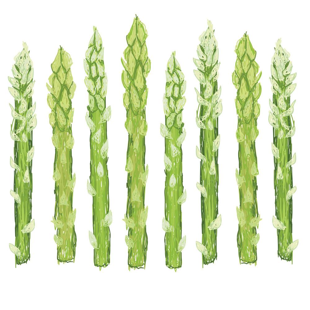Green Asparagus Isolated
