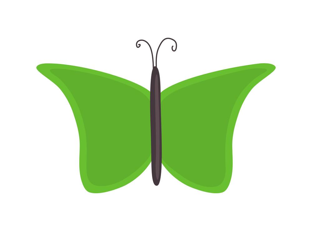 Green Butterfly Design