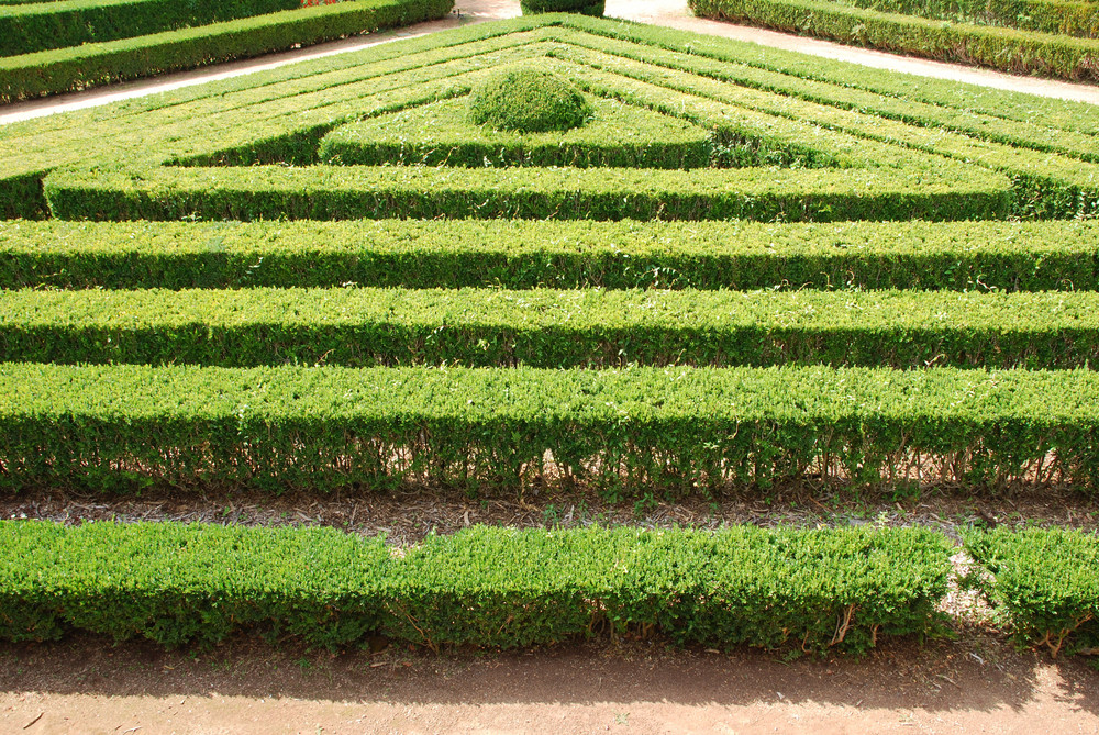 Green Cuted Bushes (triangular Shape)