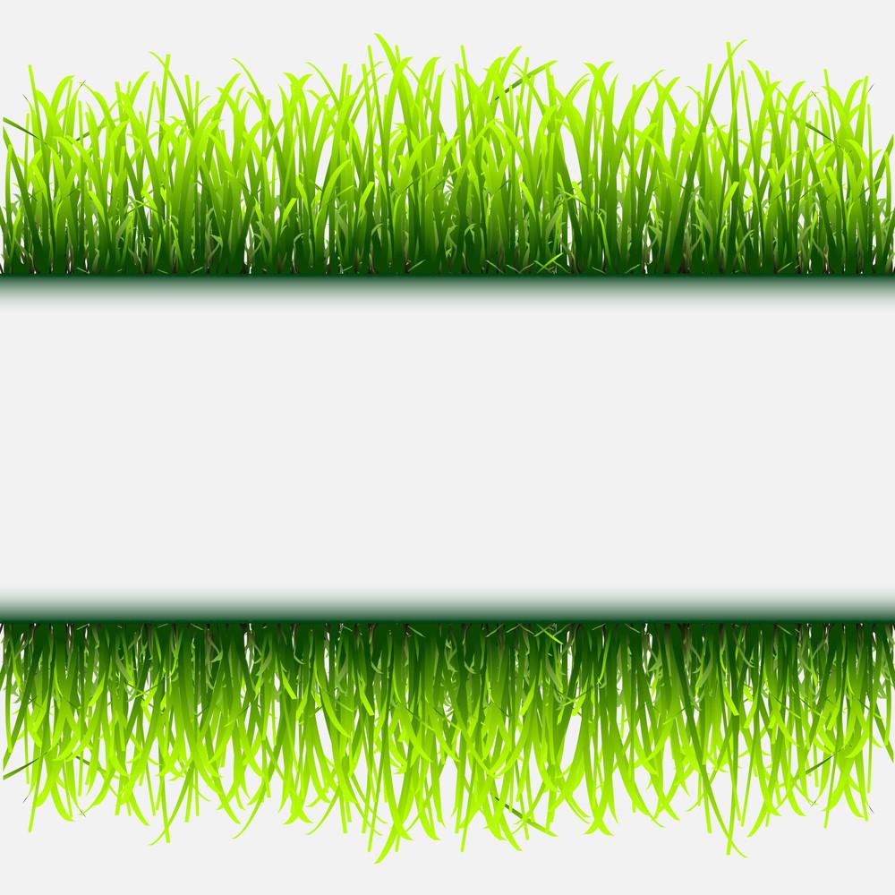 Green Grass, Flowers And Butterflies