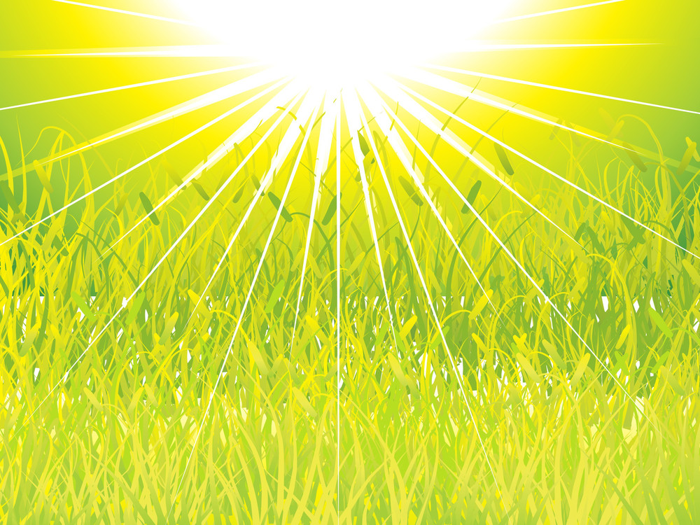 Green Grass Sunset Background
