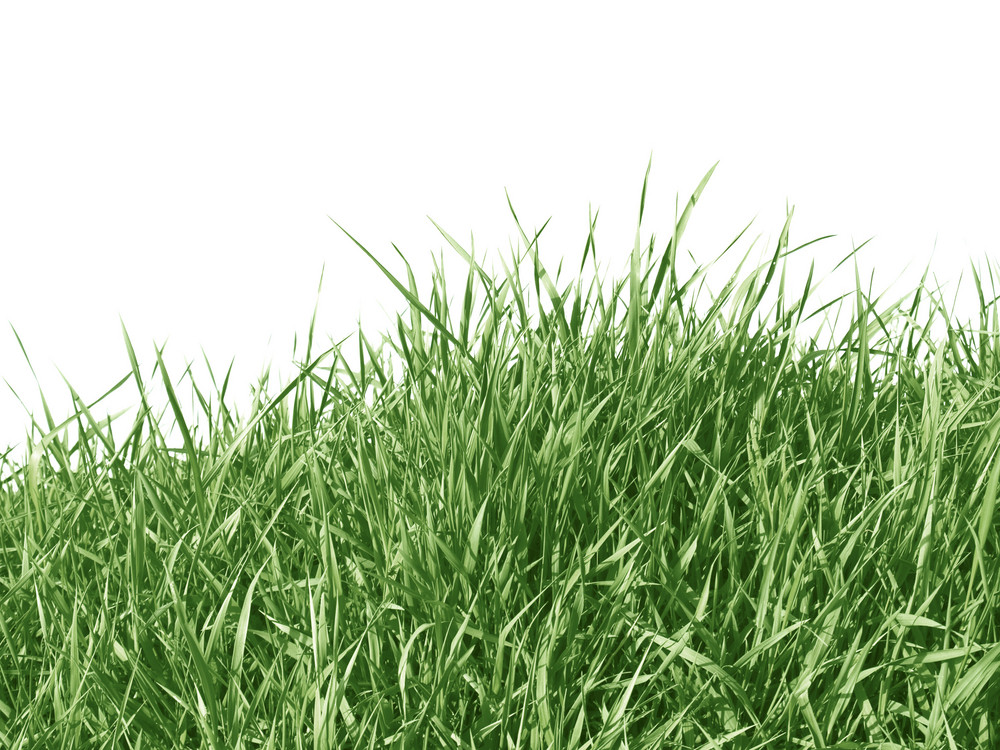 Green Grass Texture Isolated On White