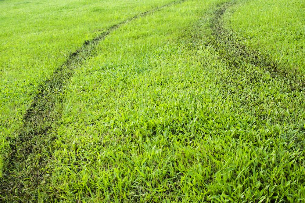 green grass way texture