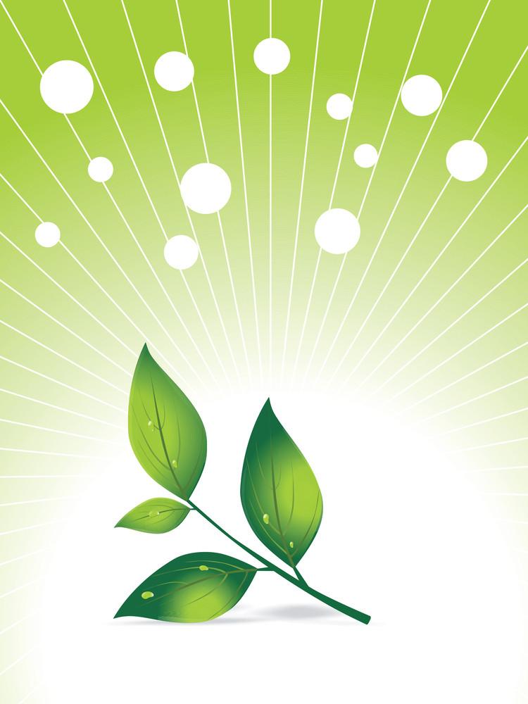 Green Herbal Leaf And Fog