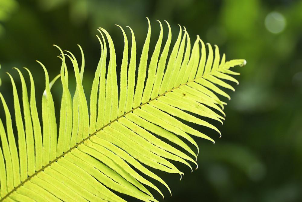 Green leaf on blur bokeh background