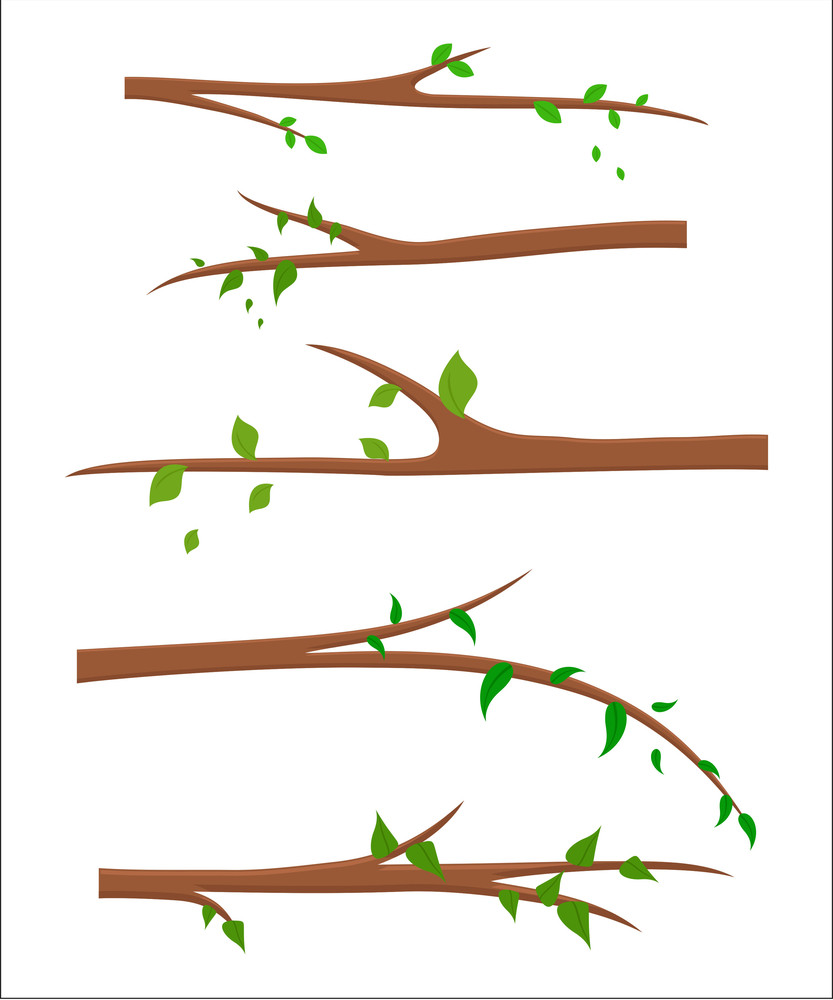 Green Leaves Branches