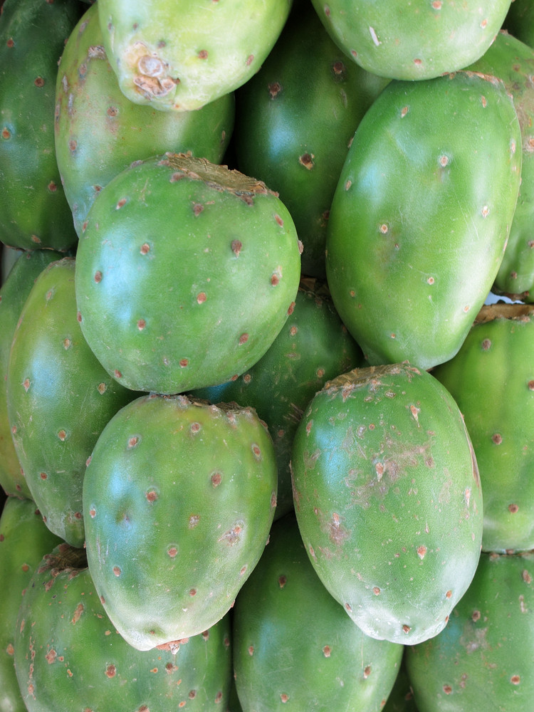 Green Prickly Pear