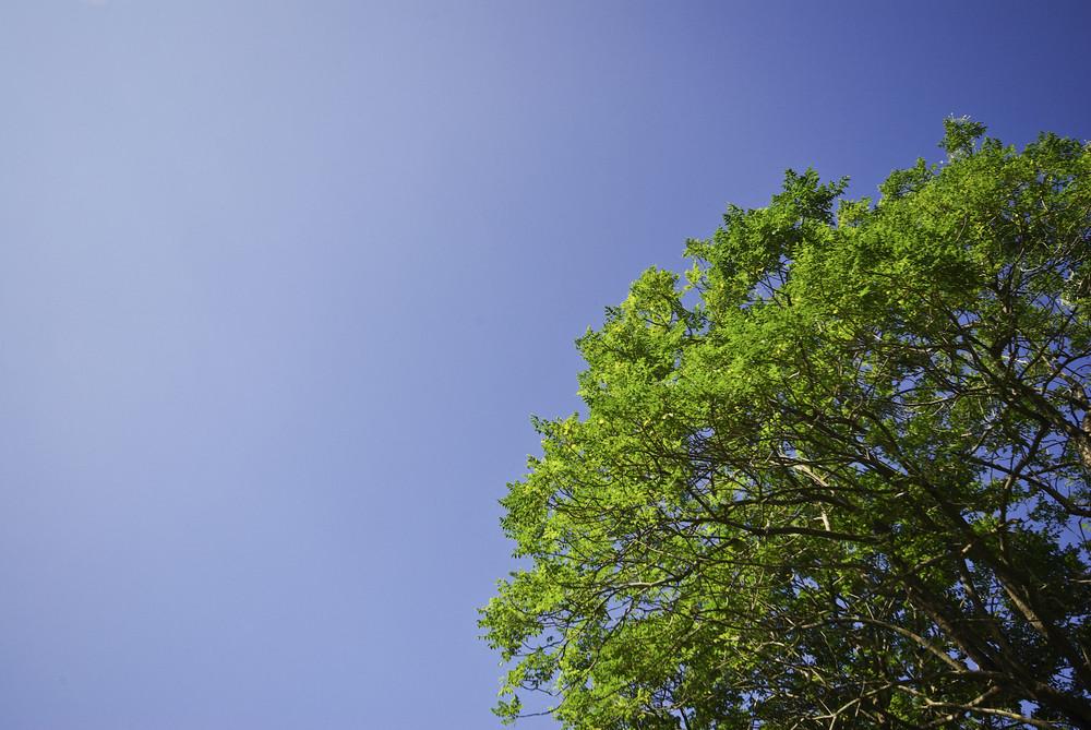 Green tree on blue sky