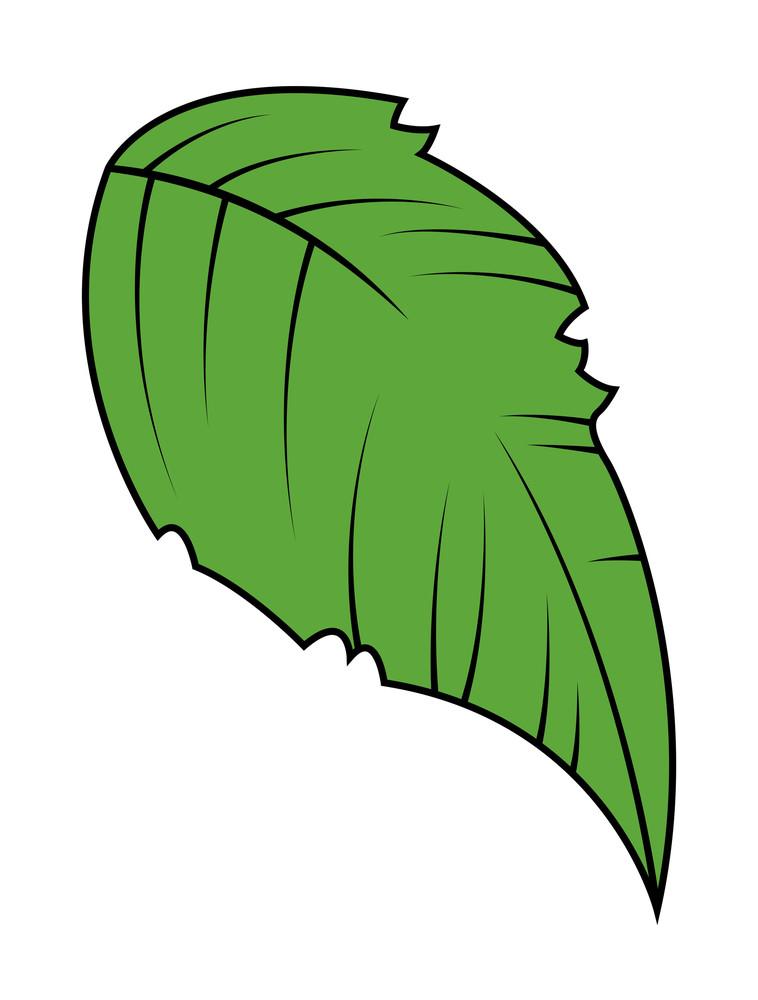 Green Vector Leaf Design