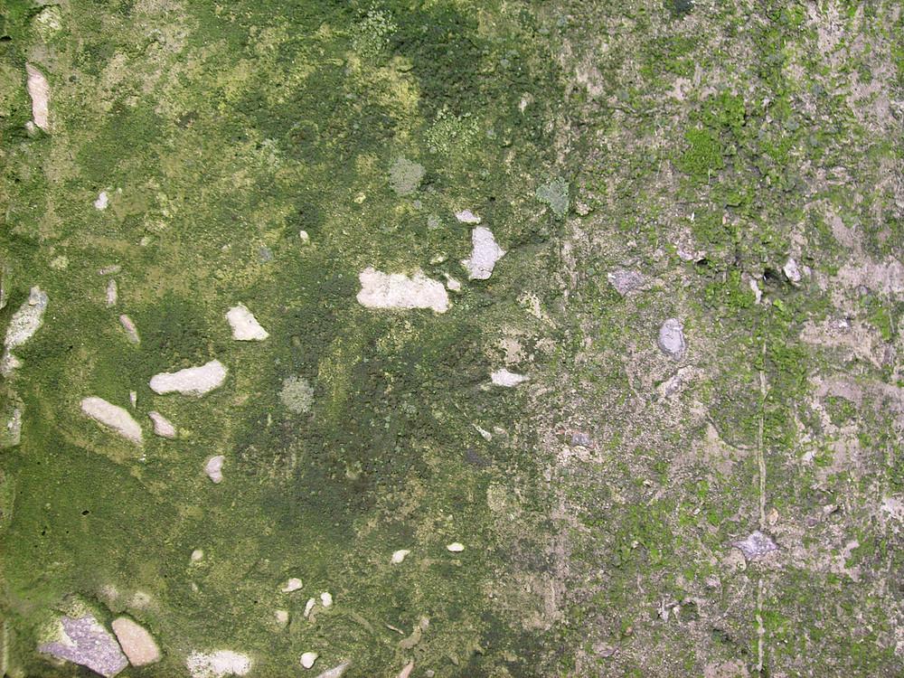 Green_texture_-_lichen