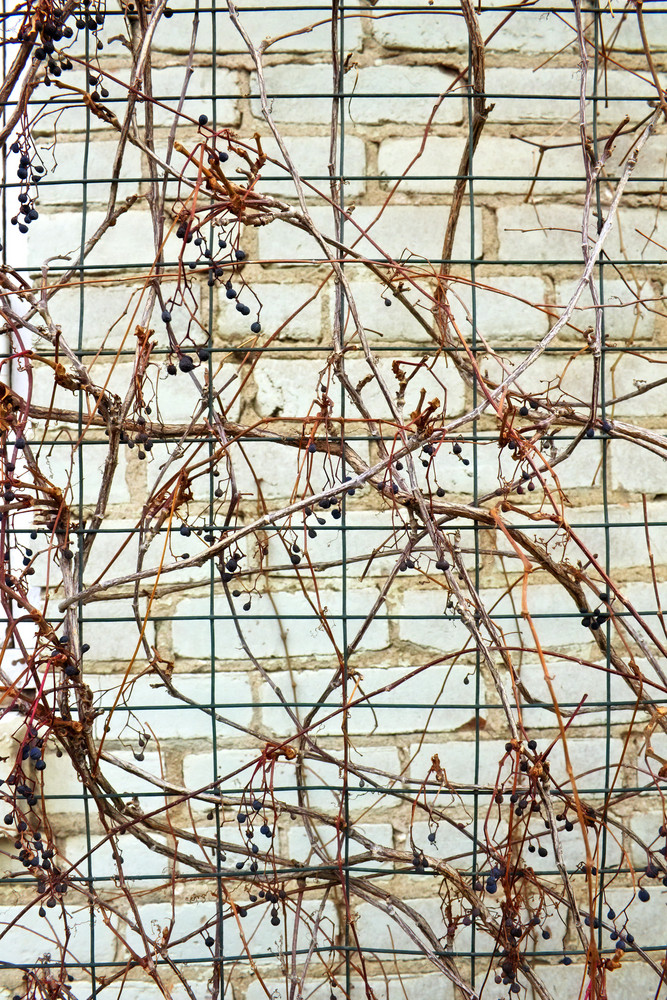Grunge Branches Wire Frame