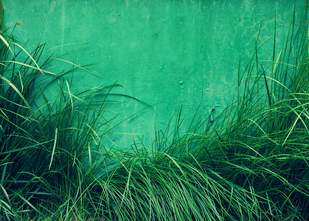Grunge green background from grass and painted iron wall