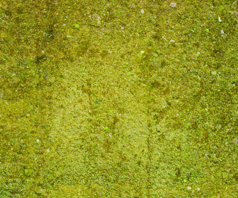 Grunge Green Moss Wall Background