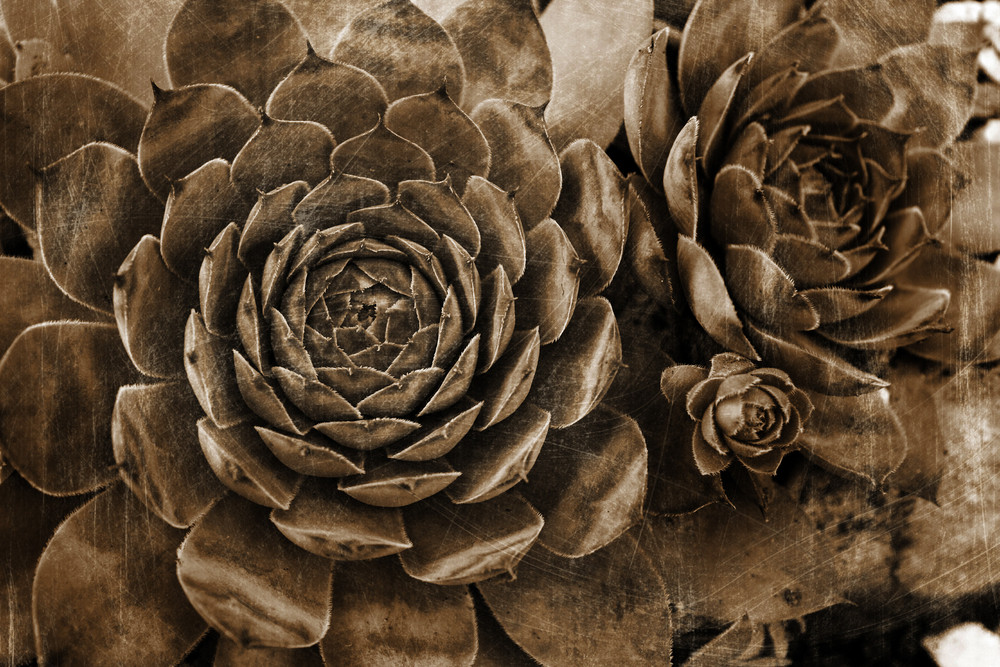 Grunge Succulent Plant