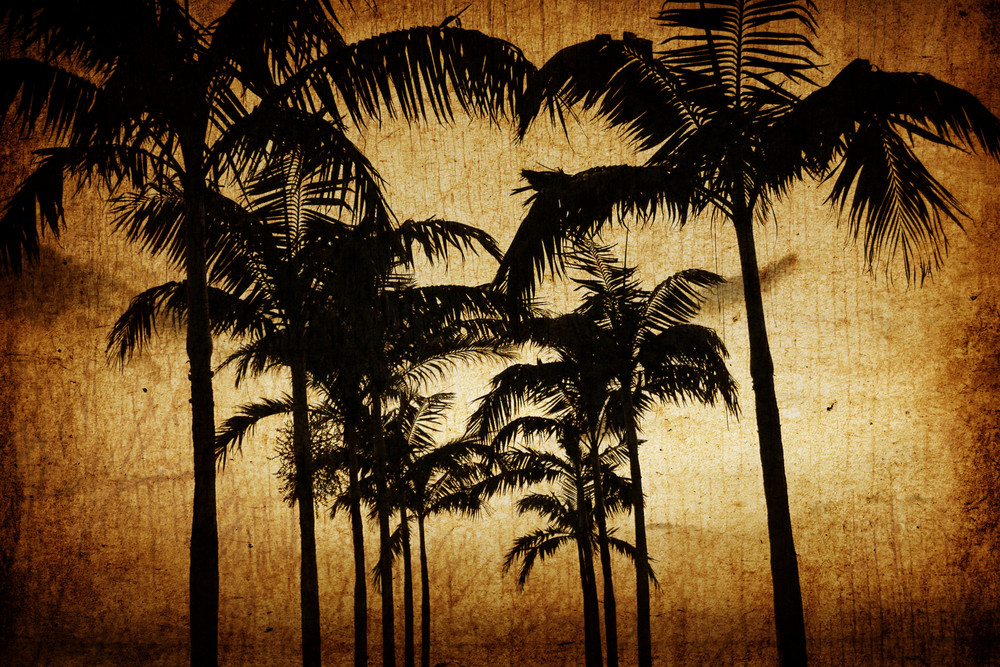 Grungy Palm Tree Background