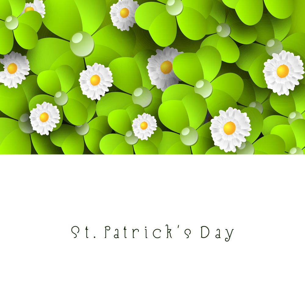 Happy St. Patrick's Day Concept With Beautiful Shemrock Flowers And Leaves And Space For Your Message.