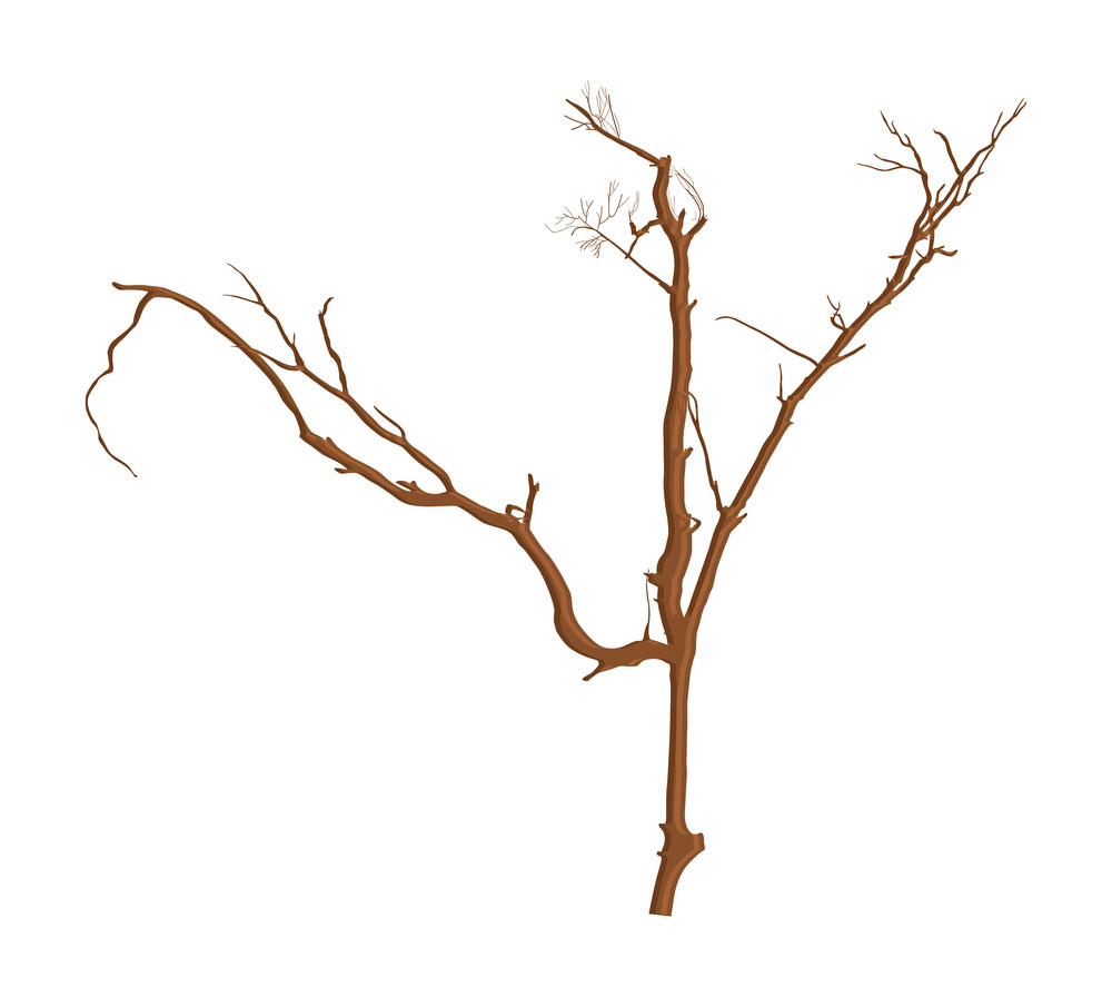 Haunted Dead Tree