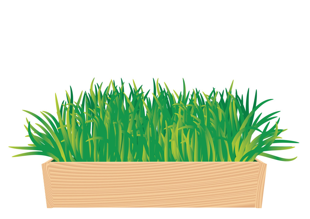Healthy Grass In The Wooden Box. Vector Illustration