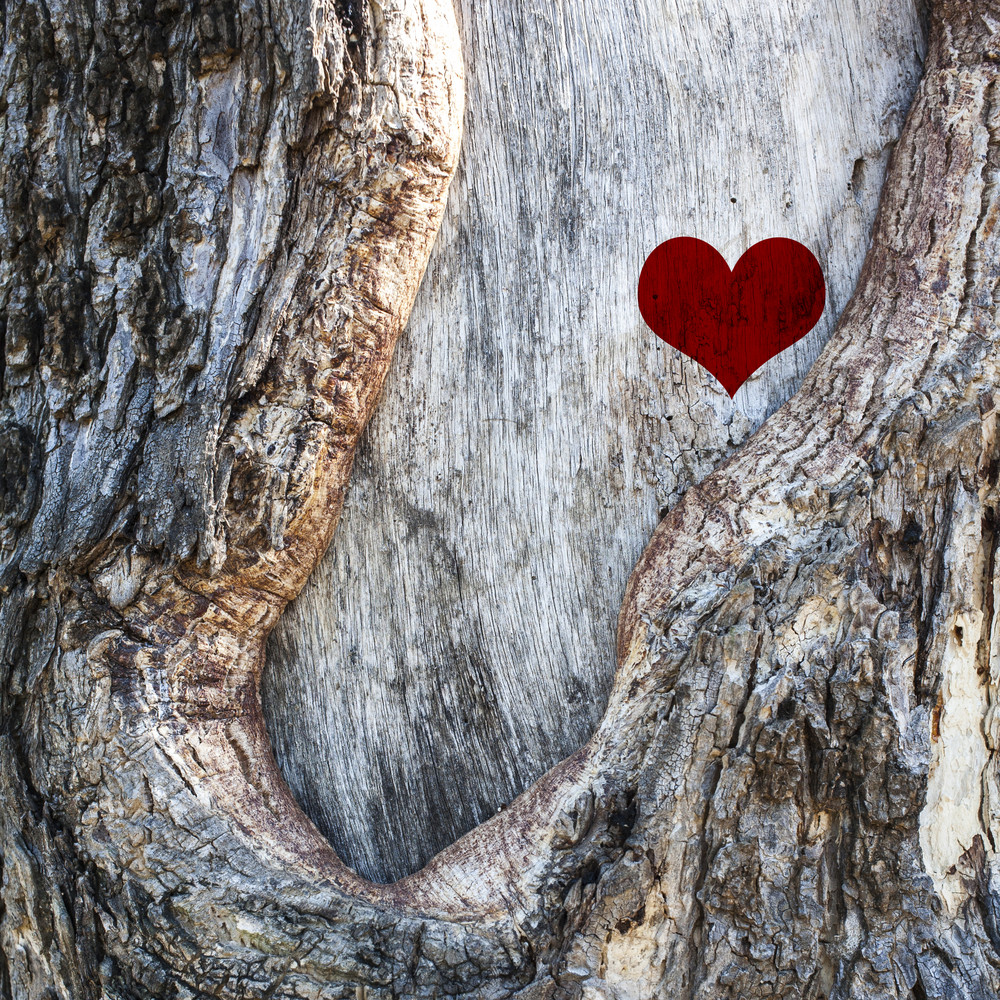 Heart of nature on tree background