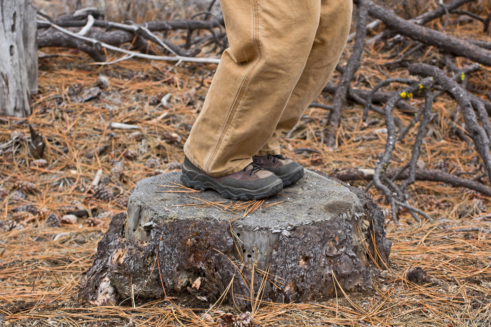 Hiking Person On Tree Stump