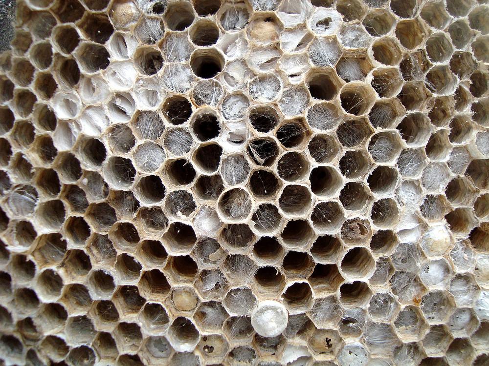 Honeycomb_texture