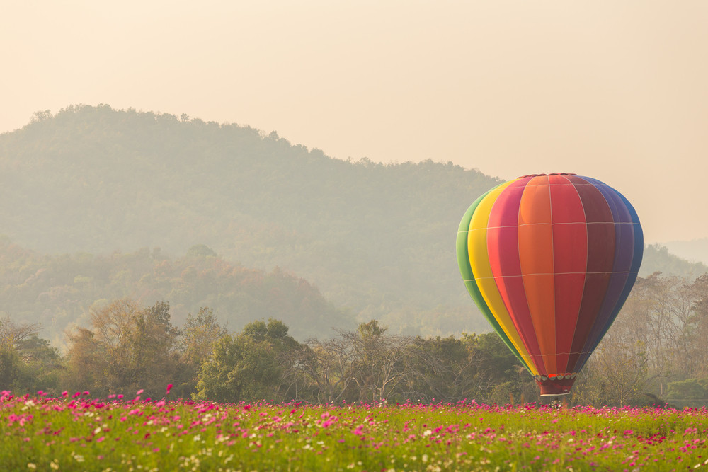 Hot air balloon in flower plant