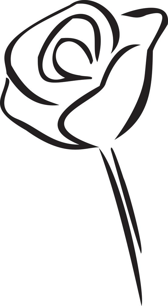 Illustration Of A Rose.