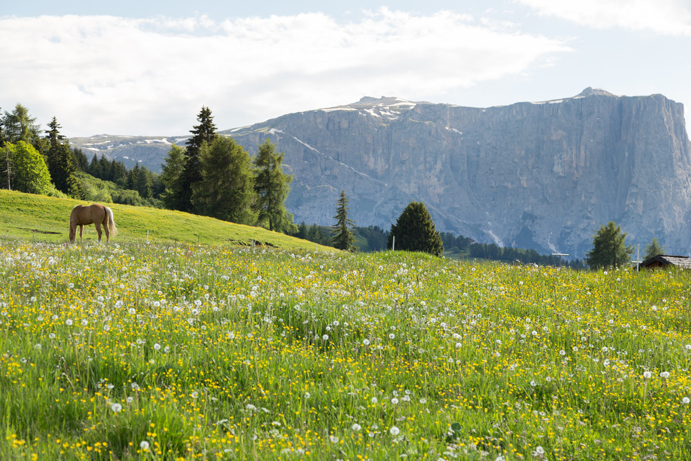 Image of horse on Lankoffel mountain range. View from Seiser Alm, Dolomites, Italy.