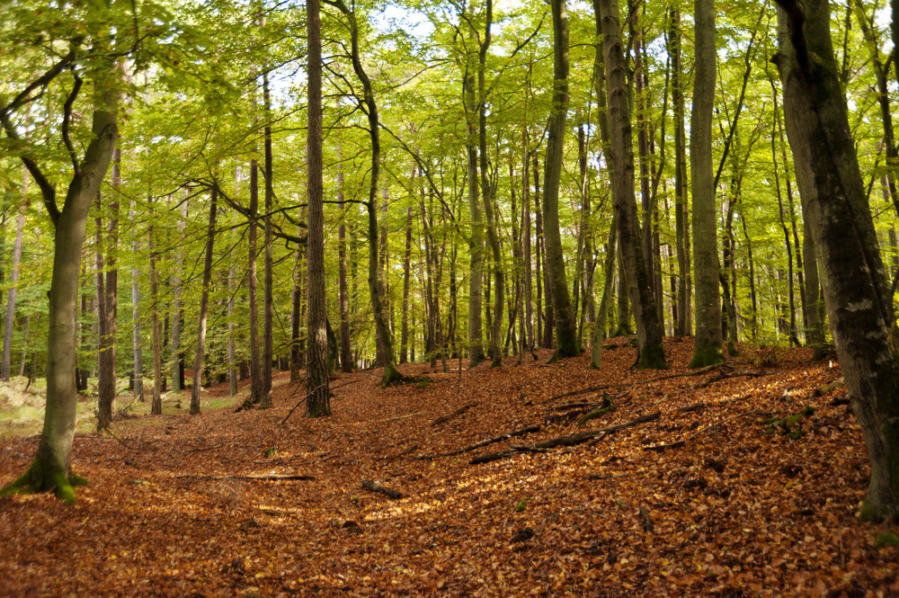 In The Forest Of Darss In Germany