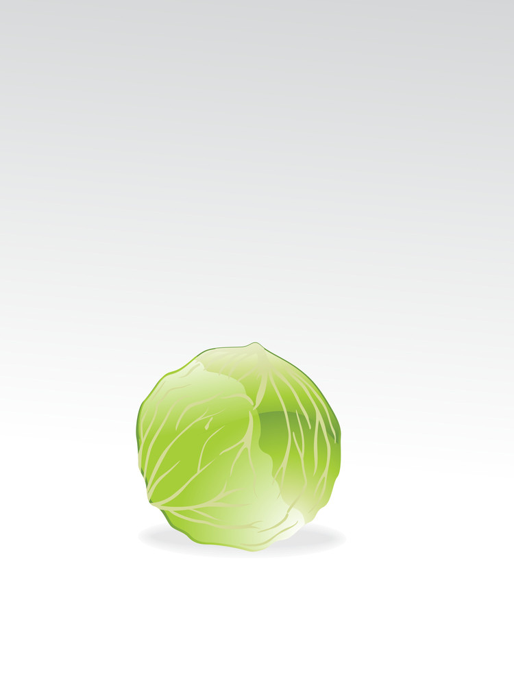 Isolated Cabbage With Background