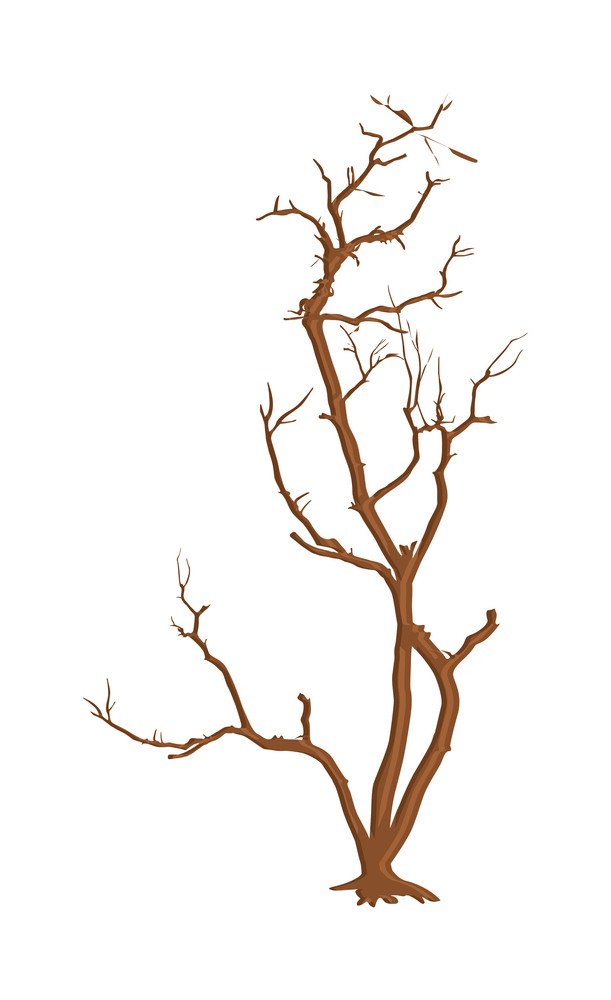 Isolated Dead Tree Background