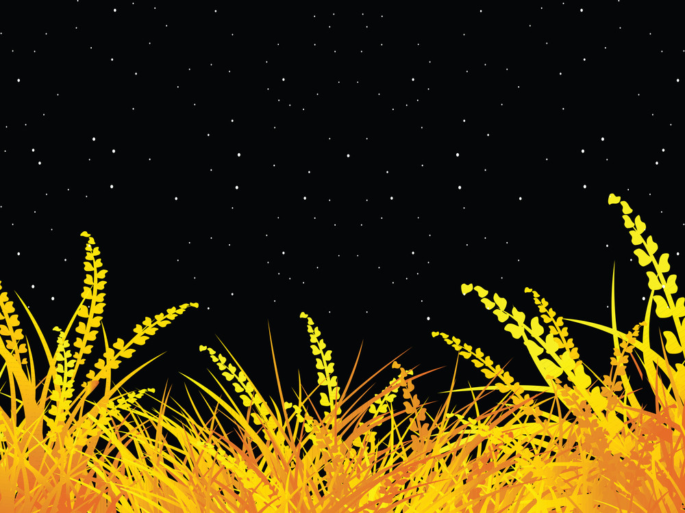 Isolated Green Grass On Night Background
