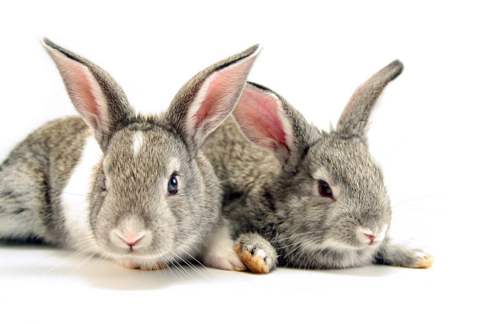 Isolated Rabbits