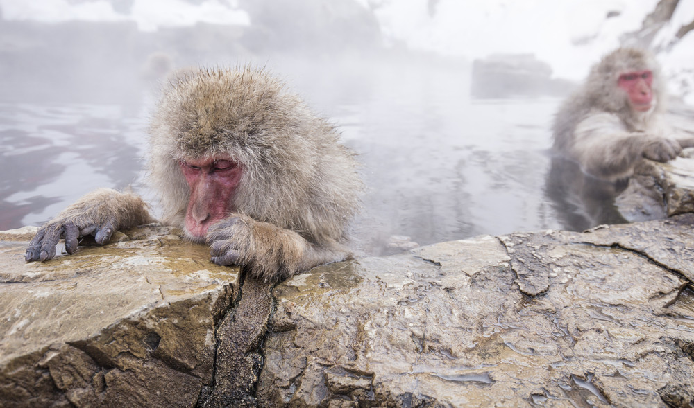 Jigokudani snow monkey bathing onsen hotspring famous sightseeing in Japan.