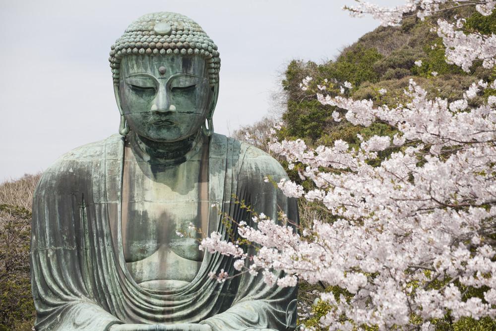 KAMAKURA - APRIL 13 : Close up great buddha with sakura foreground in Kotoku-in Temple on April 13, 2012 in Kamakura, Kanagawa, Japan