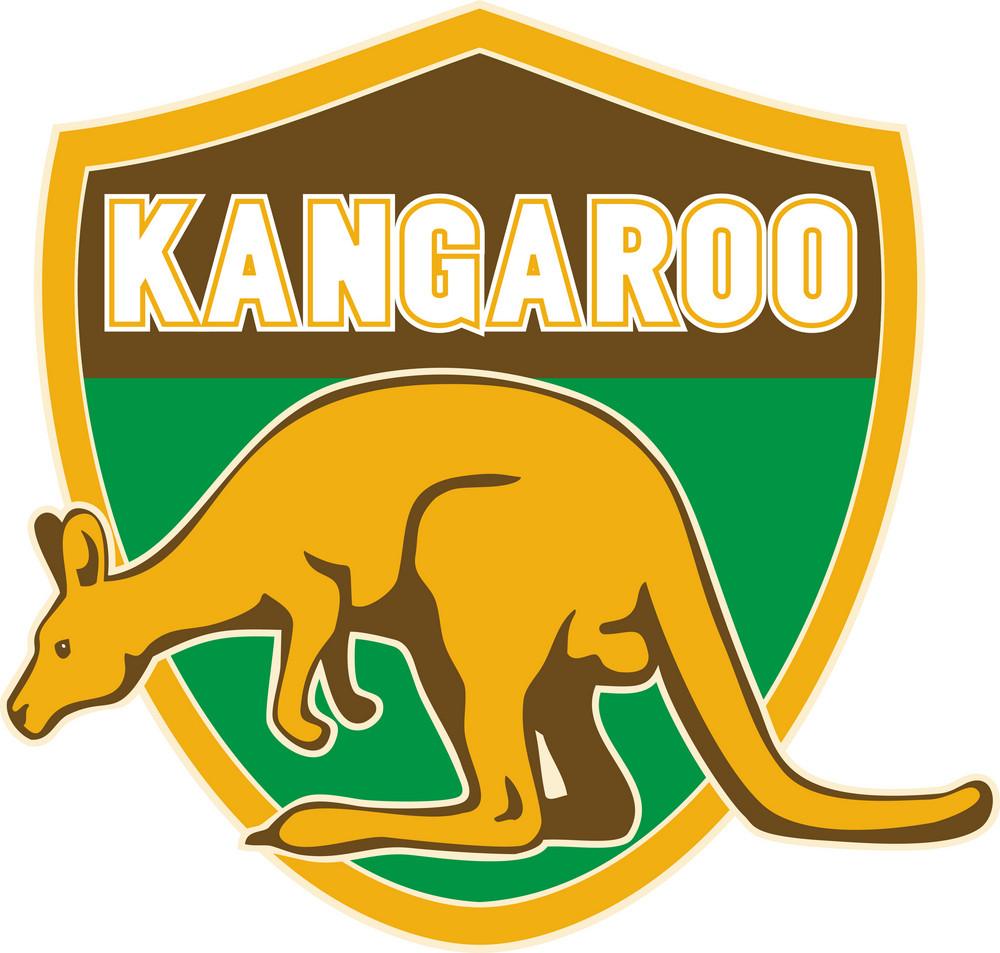 Kangaroo Sports Mascot Shield