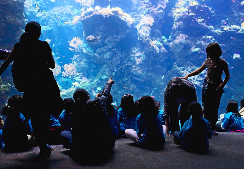 Kids Watching Aquarium