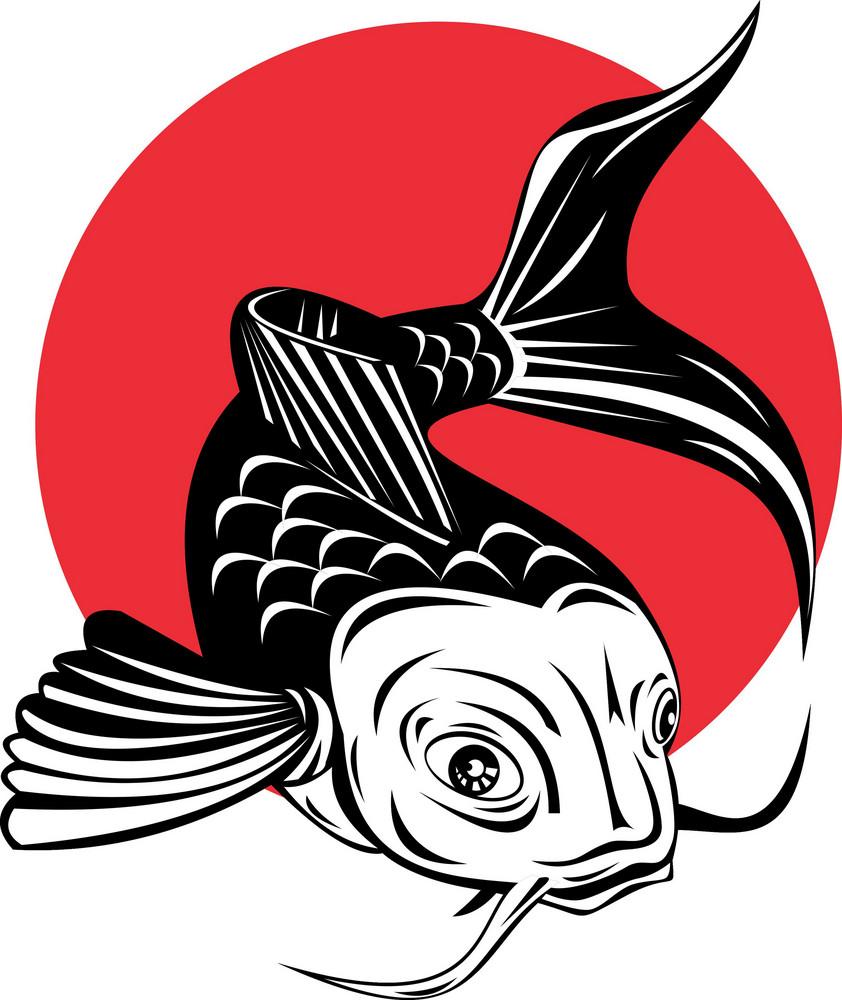 Koi Carp Fish Jumping