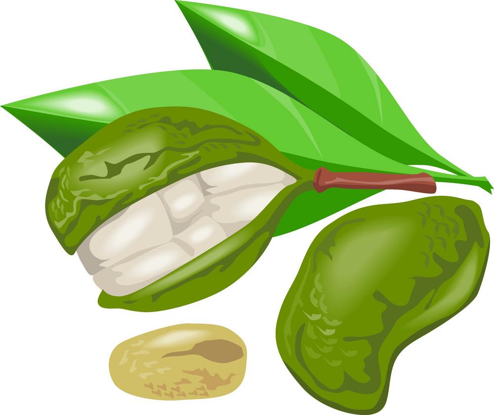 Kola Nut Fruit Retro