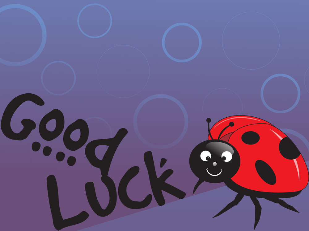 Lady Bug Vector Illustration