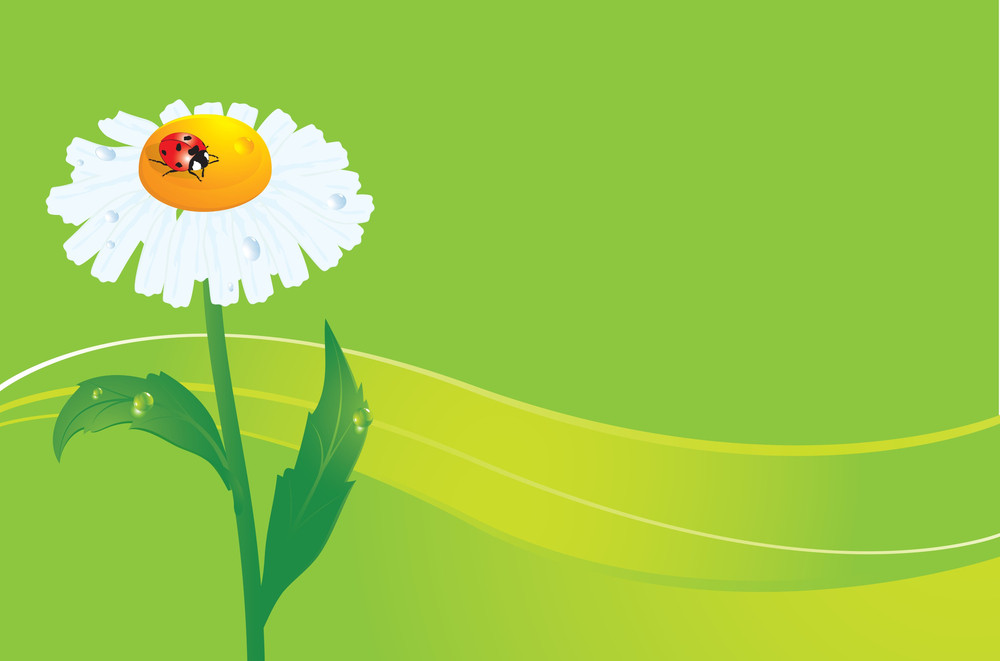 Ladybird On Daisy. Vectror Background.
