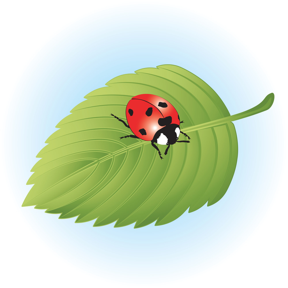 Ladybird On Leaf. Vector.
