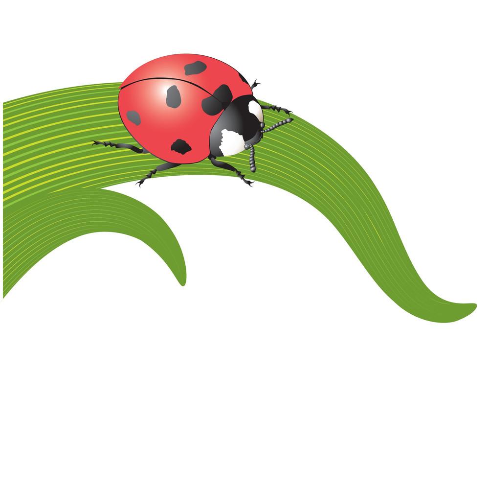 Ladybird On The Grass